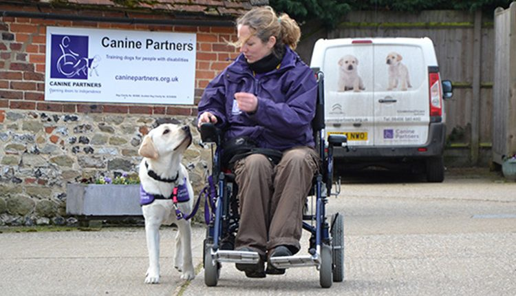Advanced Training Leona in wheelchair training a dog