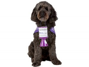Goldendoodle demo dog Doyle holding collection tin