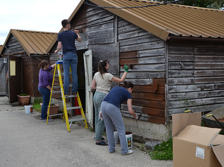 Volunteers painting a shed at Canine Partners Southern centre