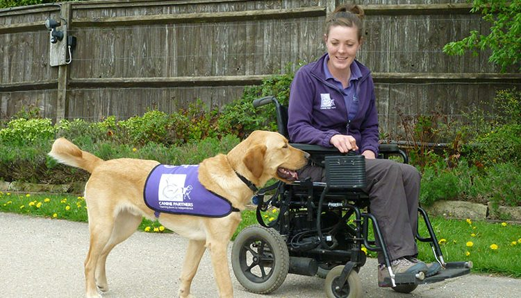 Advanced trainer Clare training assistance dog Griffin to walk alongside wheelchair