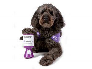 Goldendoodle demonstration dog Doyle with paw on fundraising tin