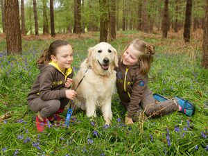 site_imagery_events_Bluebell_walk_brownies