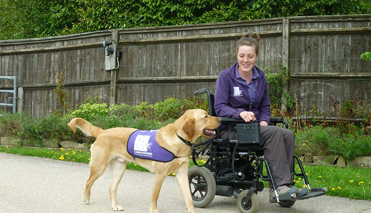 Advanced trainer Clare teaching dog how to walk alongside wheelchair on lead