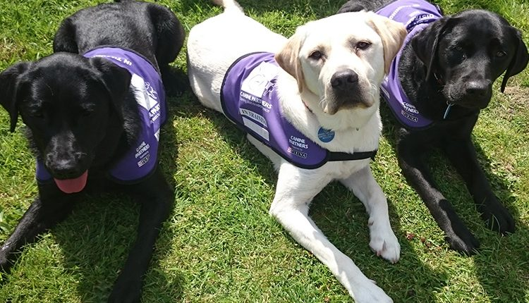 Three assistance dogs in training Freya, Jagger and Fleur laying down on grass