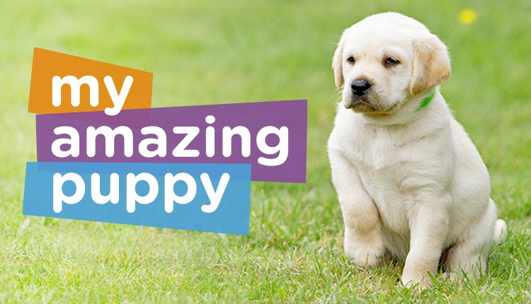 Sponsor an assistance dog puppy with Canine Partners My Amazing Puppy