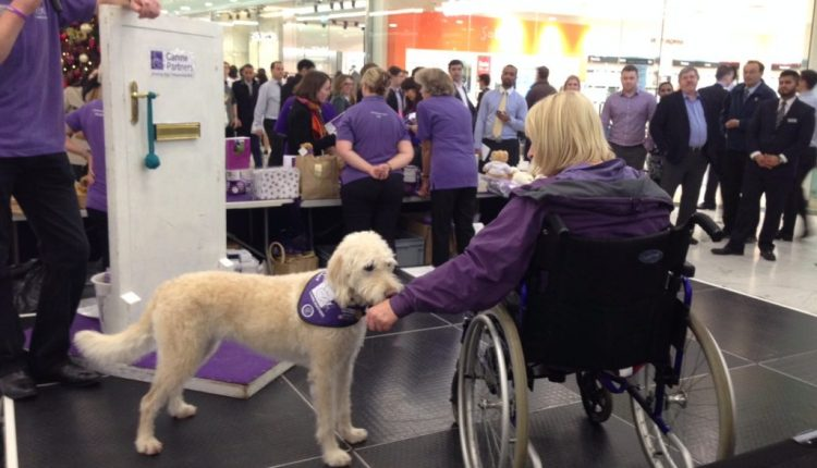 Canine Partners poodle cross demo dog Saffy tugging on sleeve of woman in wheelchair at Canary Wharf event
