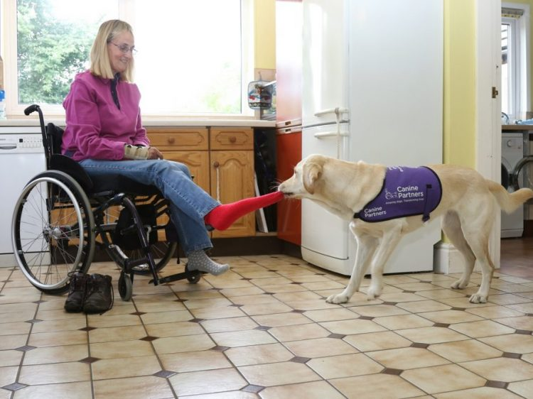 Assistance dog May removing owner Kate's sock