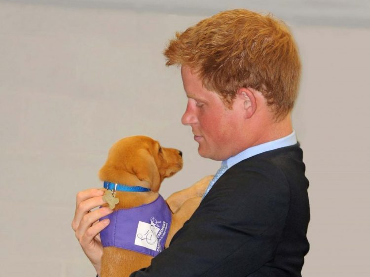 Prince Harry with Canine Partners puppy in training Veyron