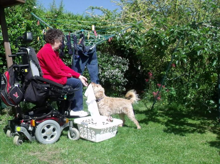 Assistance dog Harvey helping wheelchair user Lizzie hang out the washing to dry.