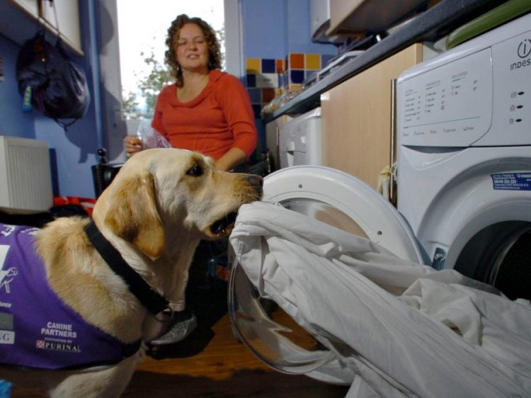 Assistance dog Harmony helping wheelchair user Sally to get washing out of the machine