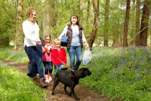 Big Bluebell Walk