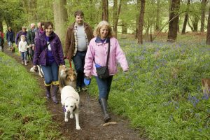 Big Heyshott Bluebell Walk (56)