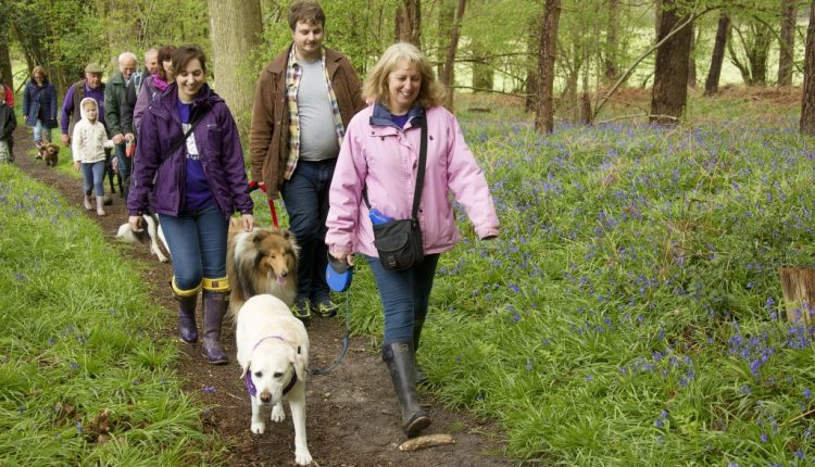Group of people with dogs walking in Bluebell woods