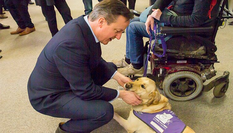 David Cameron stroking Canine Partners assistance dog Jason