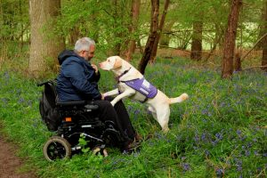 Partnership Martin Smailes and assistance dog Keith in Bluebell fields