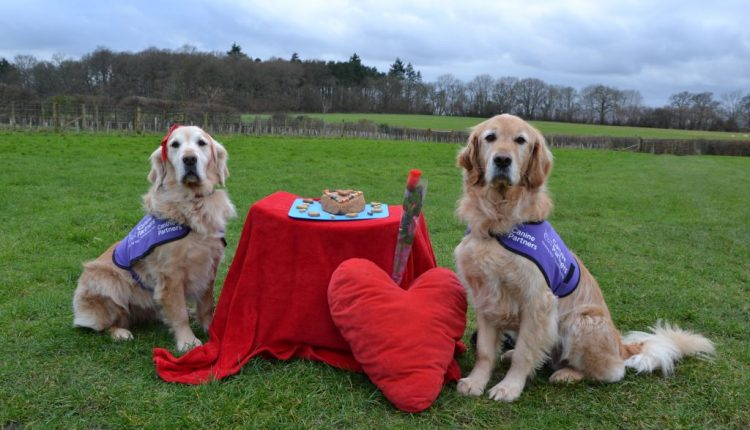 How To Make Pilchard Cake For Dogs