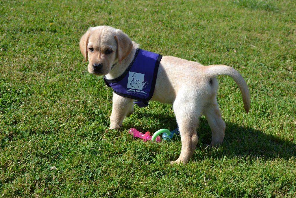 Citaten Scribbr Scribblen : Scribble an amazing puppy canine partners