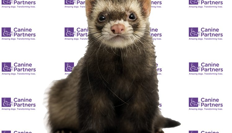 Canine Partners Scotland Ferret Race Event March 2017