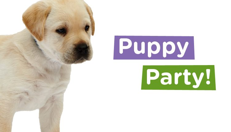 Canine Partners Puppy Party event 2017 meet puppies in training