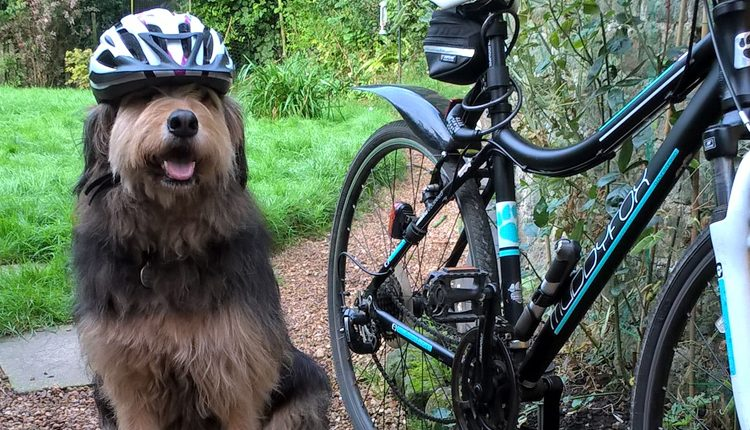 Prudential London Ride Surrey 100 for Canine Partners