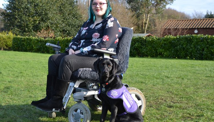Tabby and canine partner assistance dog Lindy
