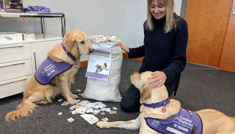 Canine Partners demo dog Blythe and puppy in training Queenie collecting recycled stamps for Canine Partners