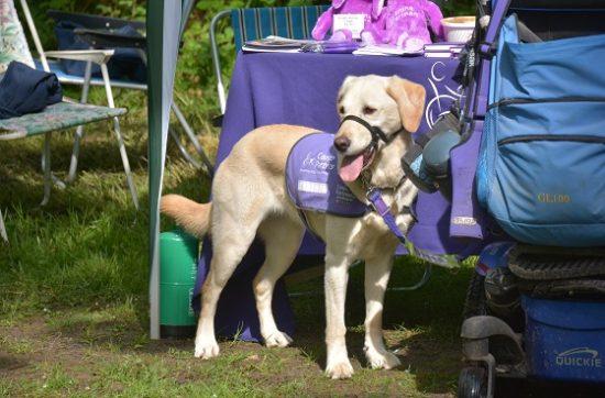 Canine partner May at the Martinshaw Wood Bluebell Walk 2018
