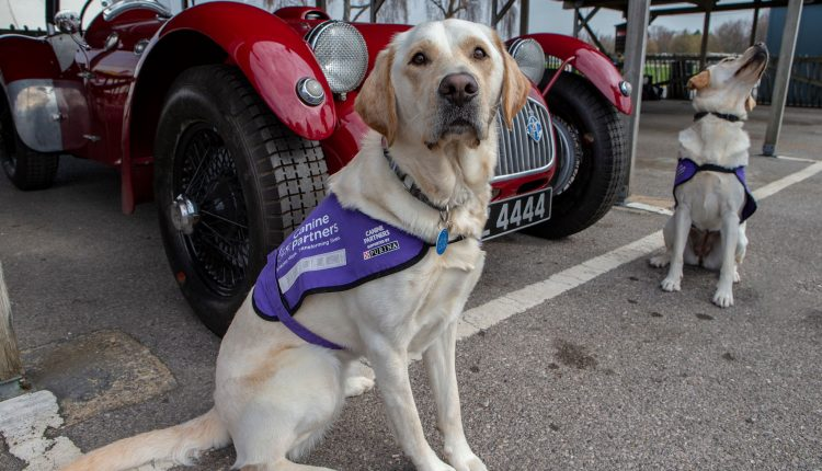Two Canine Partners in front of classic car