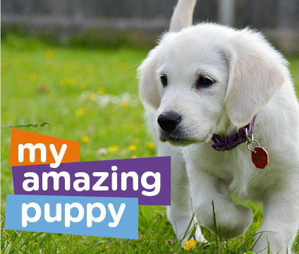 White lab puppy promoting My Amazing Puppy programme