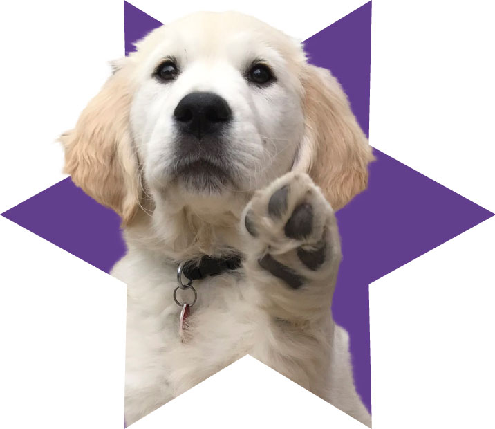 Puppy in purple star