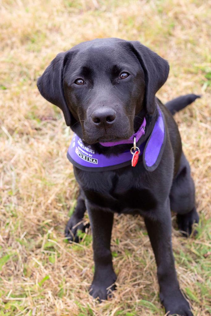 Petey puppy sponsored by Pets Corner