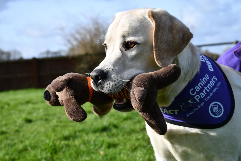 Canine Partner with petey toy