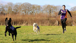 Two CP dogs running with owner