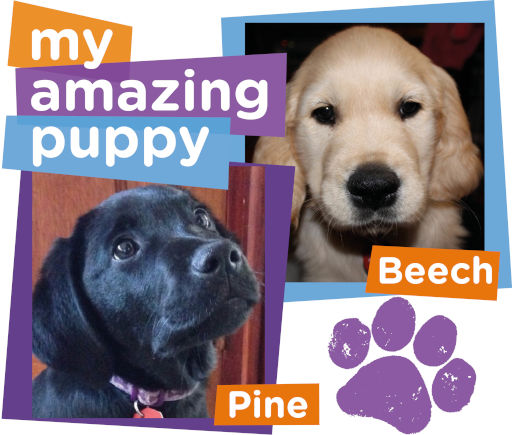 Beech or Pine, which My Amazing Puppy will you sponsor? (MAP)