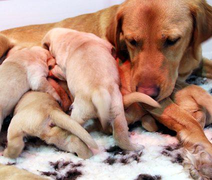 Canine Partner mum